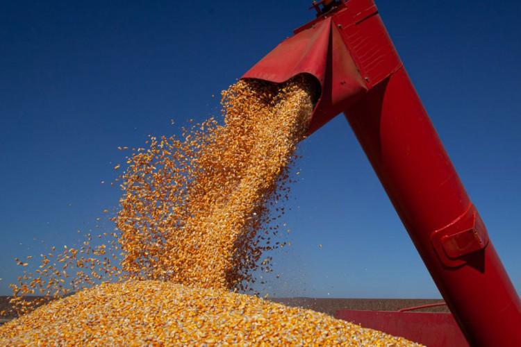 Colheita de milho, colheita de grãos (Foto: CNA/Wenderson Araujo/Trilux)