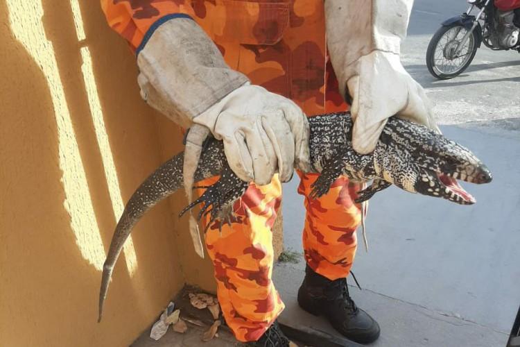 O tejo foi resgatado da entrada de uma casa no bairro Itaperi. Pedido de resgate foi para filhote de jacaré.  (Foto: Corpo de Bombeiros Militar do Ceará)