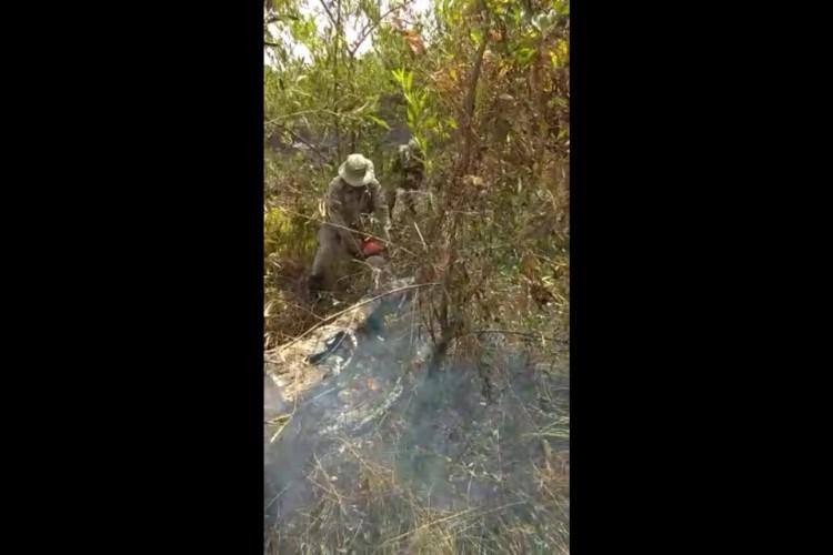 Árvore teve de ser cortada para evitar que fogo se alastrasse (Foto: Reprodução)