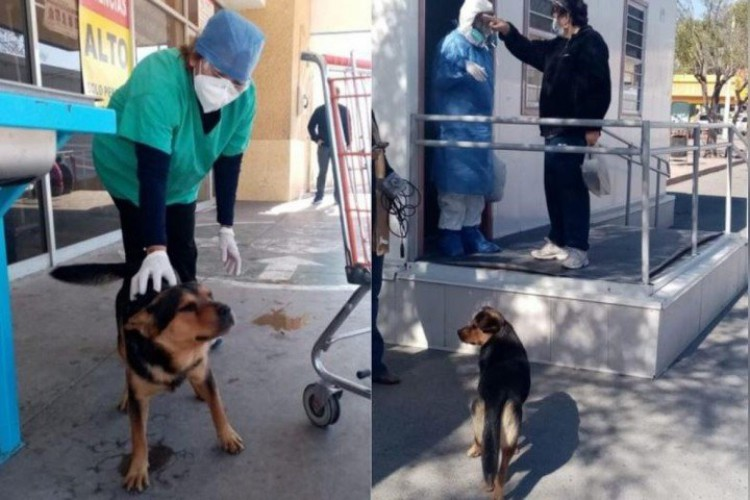Cãozinho Covito espera há um mês na frente do hospital por dono que morreu em decorrência da Covid-19, no México. (Foto: Reprodução/Facebook)
