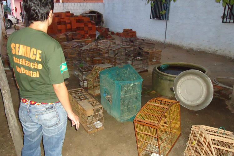 Órgão pontua que pandemia acentuou a ocorrência de crimes ambientais (Foto: Divulgação/Semace)