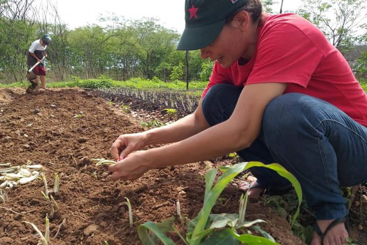 No assentamento Palmares, em Crateús, estratégias de convivência com o semiárido suprem a agricultura de sequeiro. (Foto: Aline Oliveira/ Comunicação MST)