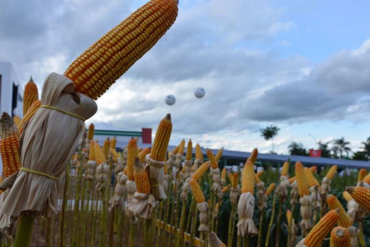 Feira agropecuária AgroBrasília  (Foto: Valter Campanato/Agência Brasil)