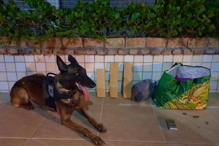 Cão farejador ajudou a encontrar drogas no bairro Éllery (Foto: Foto: Polícia Militar)