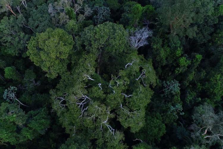 Desmatamento na Amazônia tem queda de 70% em janeiro, diz governo (Foto: )