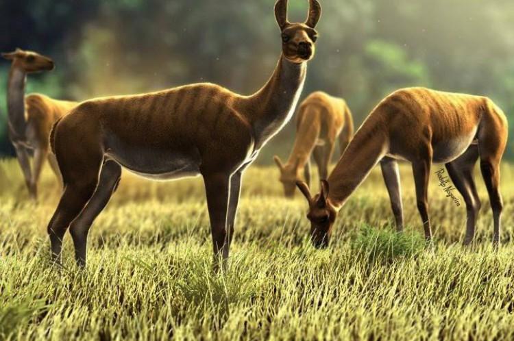As paleolhamas também viveram na região de Itapipoca.(Foto: Reprodução/ Rodolfo Nogueira)