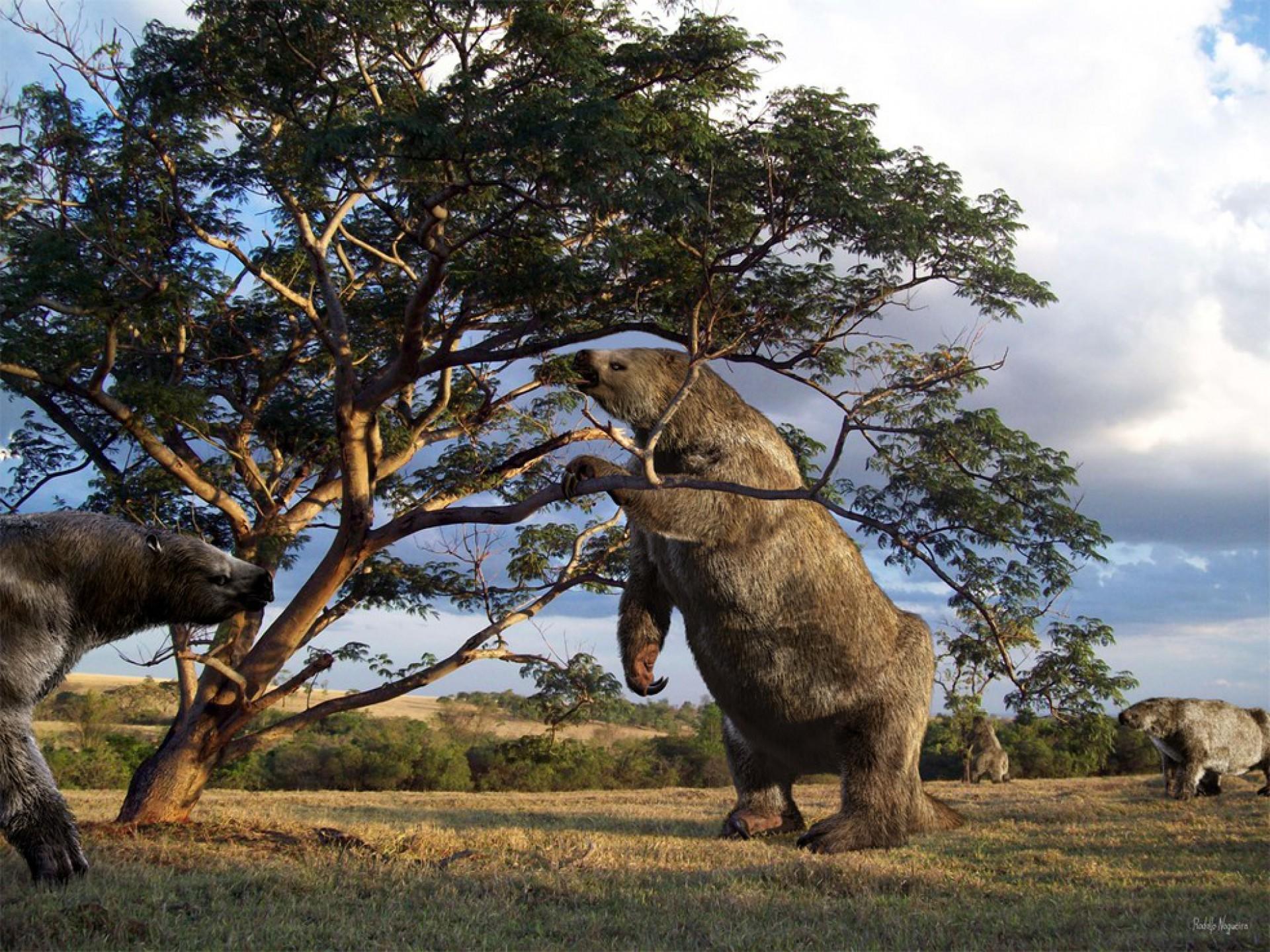 As preguiças gigantes foram os maiores mamíferos que viveram no Brasil. (Foto: Reprodução/ Rodolfo Nogueira)