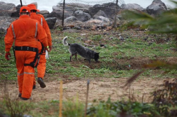 Bombeiros militares usaram cães farejadores na faixa de praia da Vila do Mar, no aparato montado pela investigação do caso. Equipe foi acionada para tentar localizar corpo de uma mulher que estaria desaparecida e teria sido enterrada na região