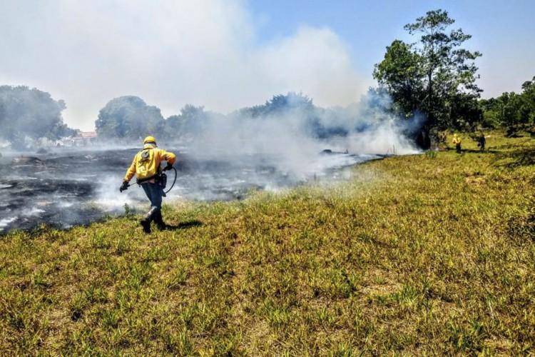 Incêndios florestais nas Unidades de Conservação caem pela metade (Foto: Divulgação Instituto Brasília Ambiental)