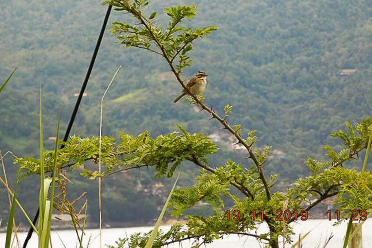 Recuperação mata atlântica/ fauna/ flora (Foto: Divulgação/PlantVerd)