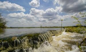 A agonia do rio Jaguaribe, afiada por Nelso Faheina