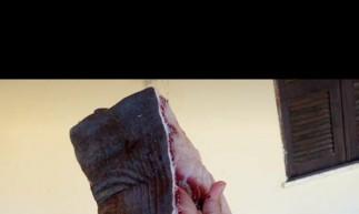 O tubarão rendeu 40 quilos de carne, consumida pelos moradores.