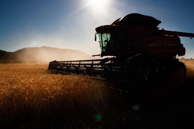 Colheita de trigo (Foto: CNA/ Wenderson Araujo/Trlux)