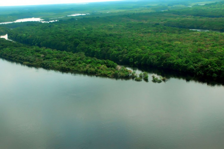 Mata Atlântica é o bioma com maior captação de água do país (Foto: )