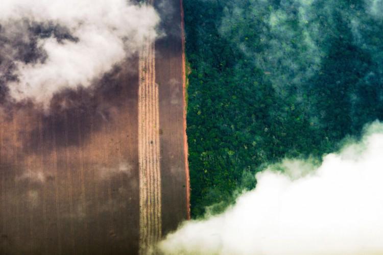 fotografia aérea Floresta amazônica, plantação (Foto: Marcelo Camargo/Agência Brasil)