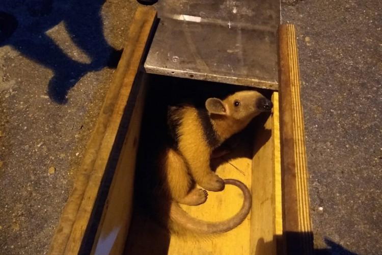 O animal foi tirado de uma árvore (Foto: Corpo de Bombeiros/Reprodução)