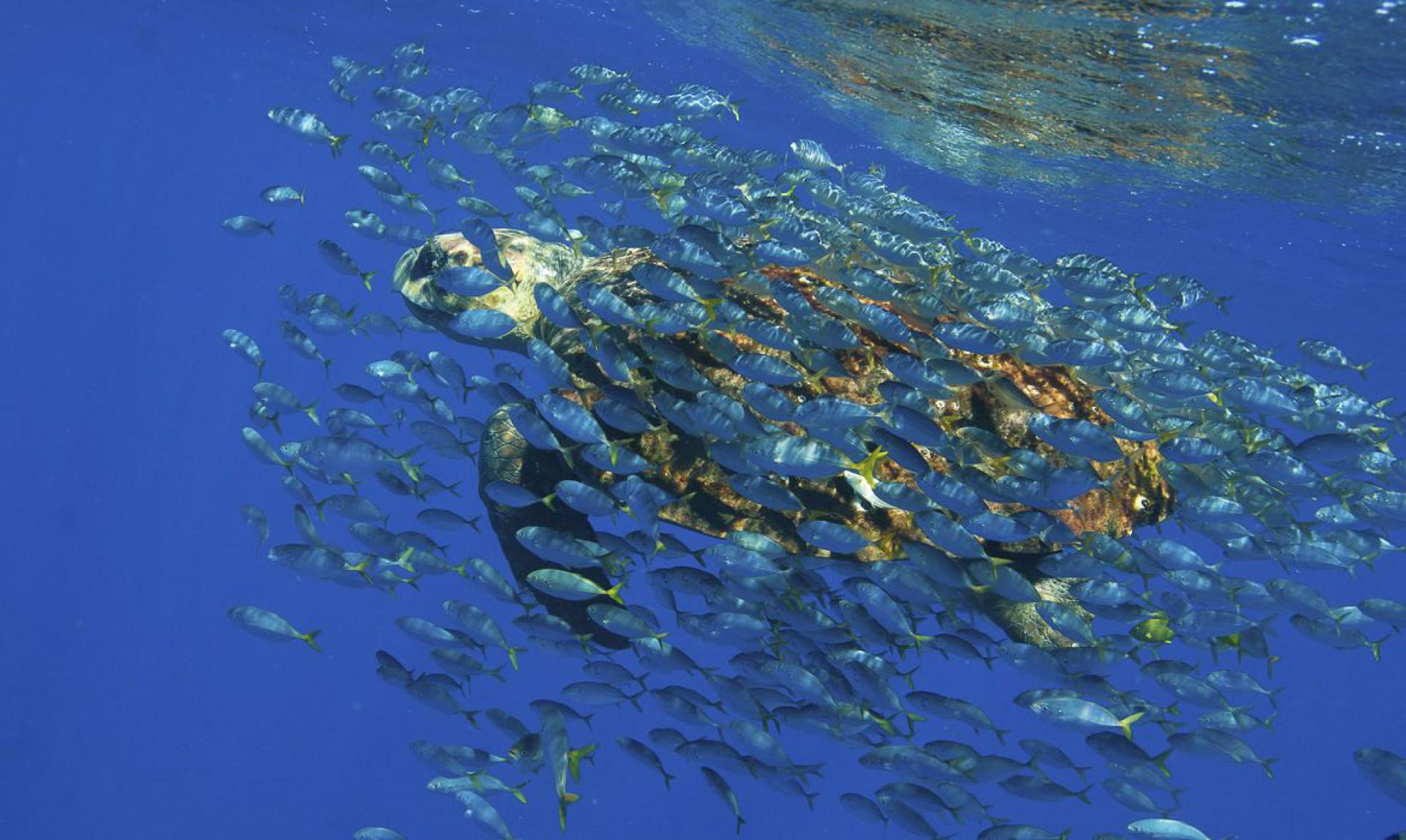 Em 2021, o mundo entrou na Década da Restauração dos Ecossistemas, junto com a Década do Oceano.