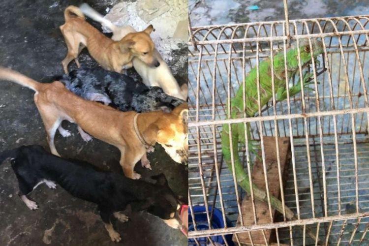 Os animais foram encontrados com sinais de desnutrição (Foto: SSPDS/Reprodução )