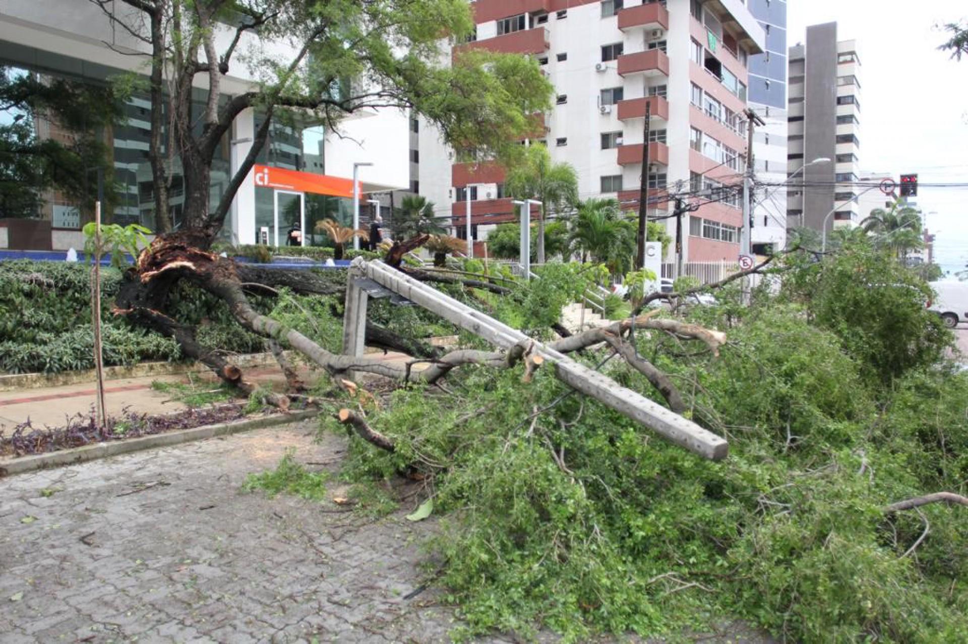 Árvore atingiu um poste de luz e bloqueou trecho da avenida Desembargador Moreira, em Fortaleza