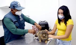 VetMóvel oferece, entre outros serviços, castração, consultas clínicas e vacinação antirrábica