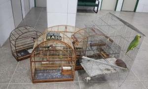 Pássaros silvestres apreendidos durante aglomeração