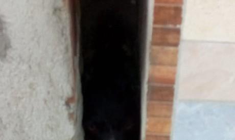 Uma cadela presa entre as paredes de duas casas foi resgatada pelo Corpo de Bombeiros em Maracanaú