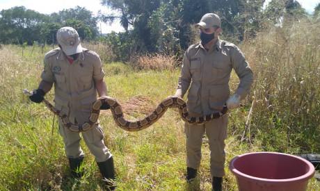 O animal foi encontrado por um morador