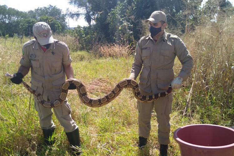 O animal foi encontrado por um morador (Foto: CBM/Reprodução)