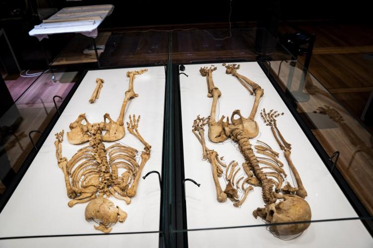 Dois esqueletos no Museu Nacional da Dinamarca, em Copenhague. Ossadas de vikings que eram parentes são reunidas após um milênio (Foto: Ida Marie Odgaard / Ritzau Scanpix / AFP)