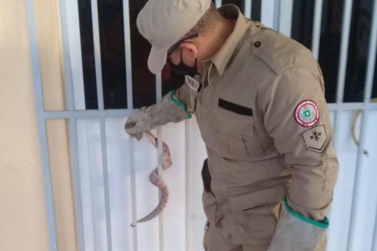 Cobra foi resgatada em escola no município de Quixadá (Foto: Divulgação CBMCE)