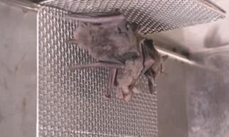 Imagens de morcegos no que seria laboratório de Wuhan, na China.