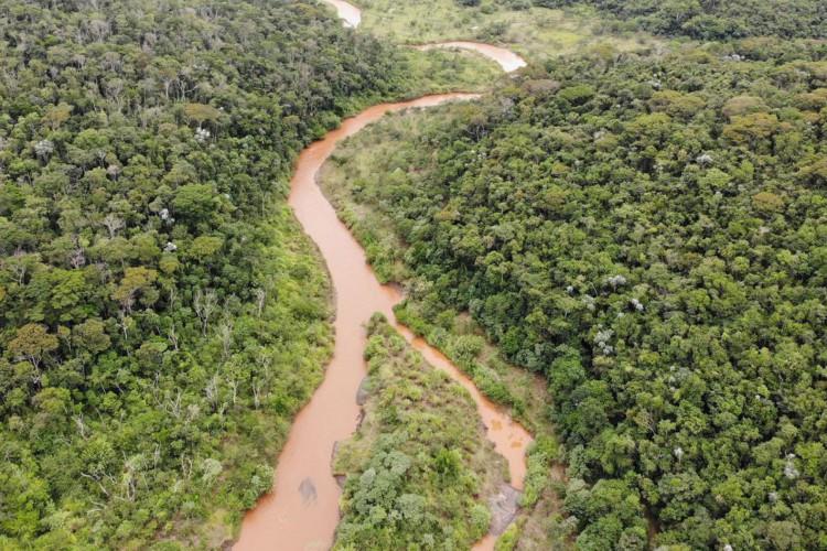 Reflorestamento de áreas atingidas em Mariana (Foto: Imagem cedida pela Fundação Renova)