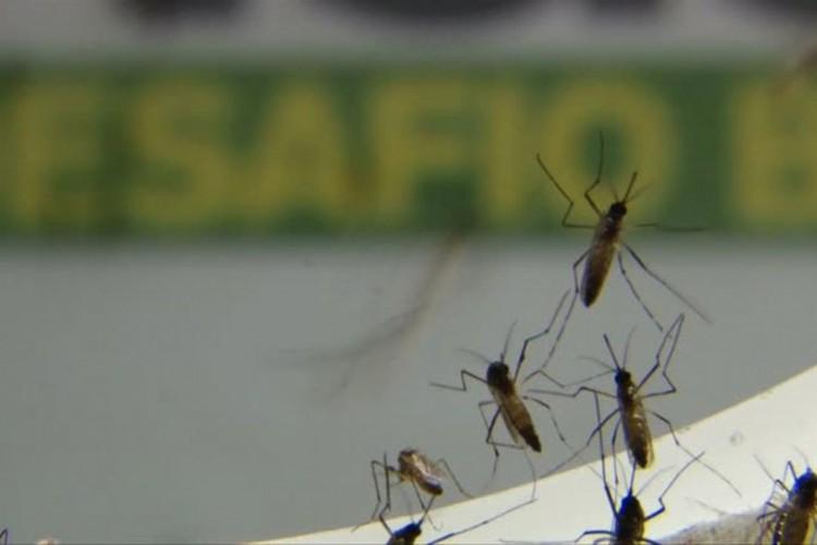 Casos de dengue em São Paulo este ano são o triplo do total de 2020 (Foto: )