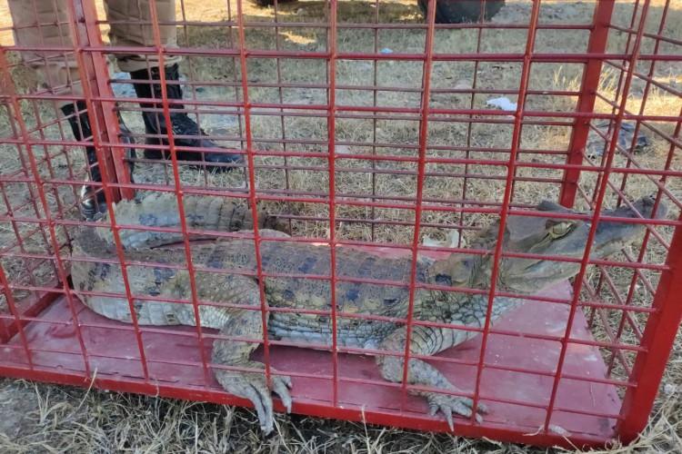 O animal deixou ferimentos artificiais no morador que tentou capturá-lo (Foto: Reprodução/CBMCE)