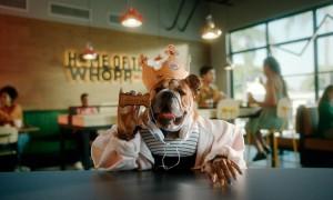 Burger King lança Whopper para cachorros