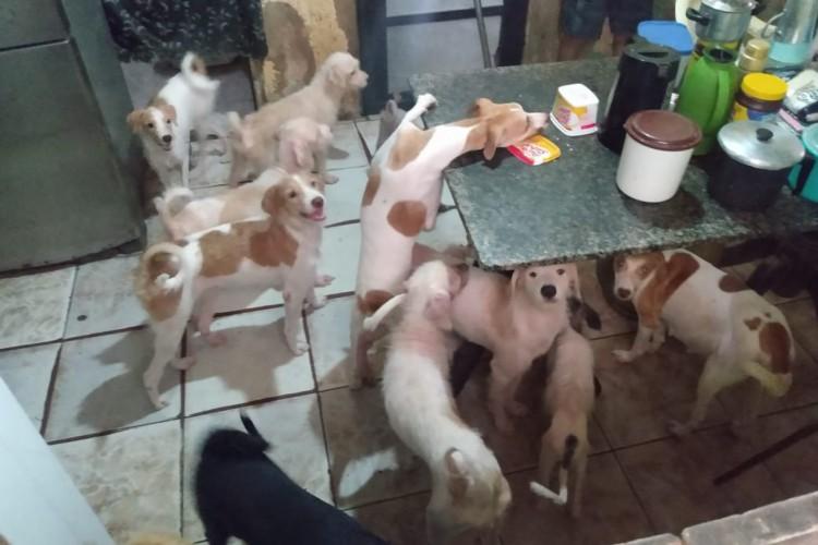 Dona de casa que cuida de 35 cachorros busca apoio e lar para os animais (Foto: Arquivo pessoal)
