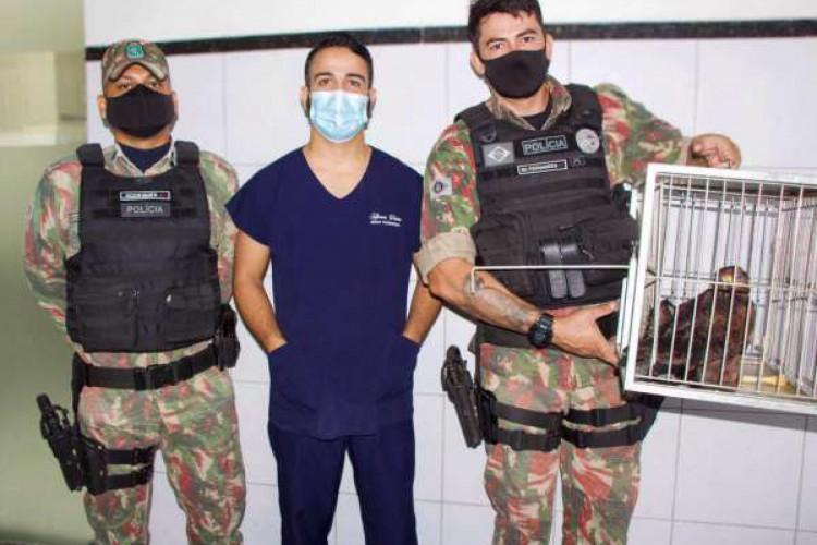 Gavião resgatado em Santa Quitéria pelo BPMA recebe alta de hospital veterinário  (Foto: Reprodução/Governo do Estado do Ceará)