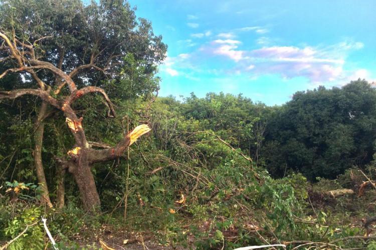 A cobertura vegetal do local é predominantemente de Matas de Tabuleiro (Tabuleiro Litorâneo) (Foto: Divulgação/OAB)
