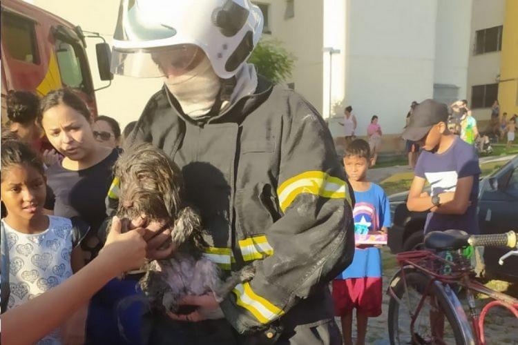 O cãozinho não apresentou ferimentos aparentes (Foto: CBMCE/Reprodução)