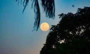 Pronto para ver a Lua Azul nascer amarela?
