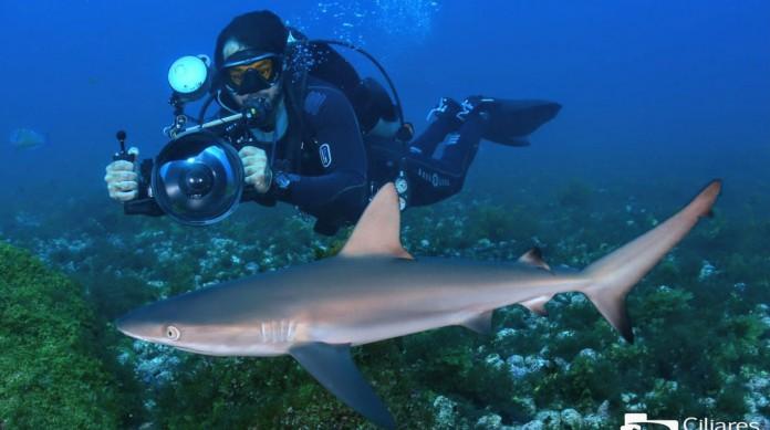 Fotógrafo subaquático Renato Magalhães registrou raro de um ovo de tubarão no mar de Fernando de Noronha