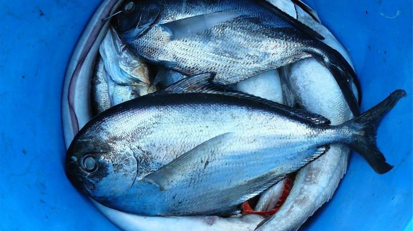 """Conhecida como """"doença da urina preta"""", síndrome de Haff é causada por uma toxina em alguns tipos de peixes e crustáceos; enfermidade não tem relação com larvas(foto: Reprodução/Pexels)"""