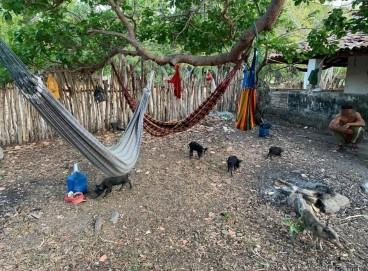 TRABALHADORES dormiam na parte externa do imóvel debaixo de árvores