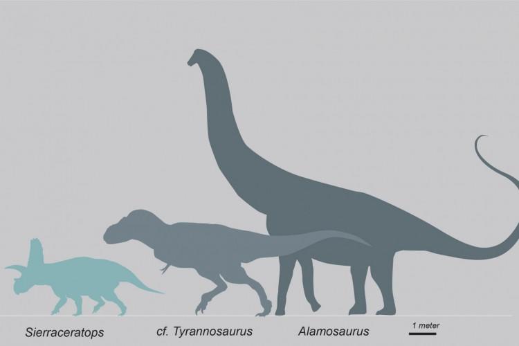 Comparação entre sierraceratops e outras espécies de dinossauros, feita por pesquisador envolvido na análise da nova espécie; o sierracerátops portava 4,5 metros de comprimento