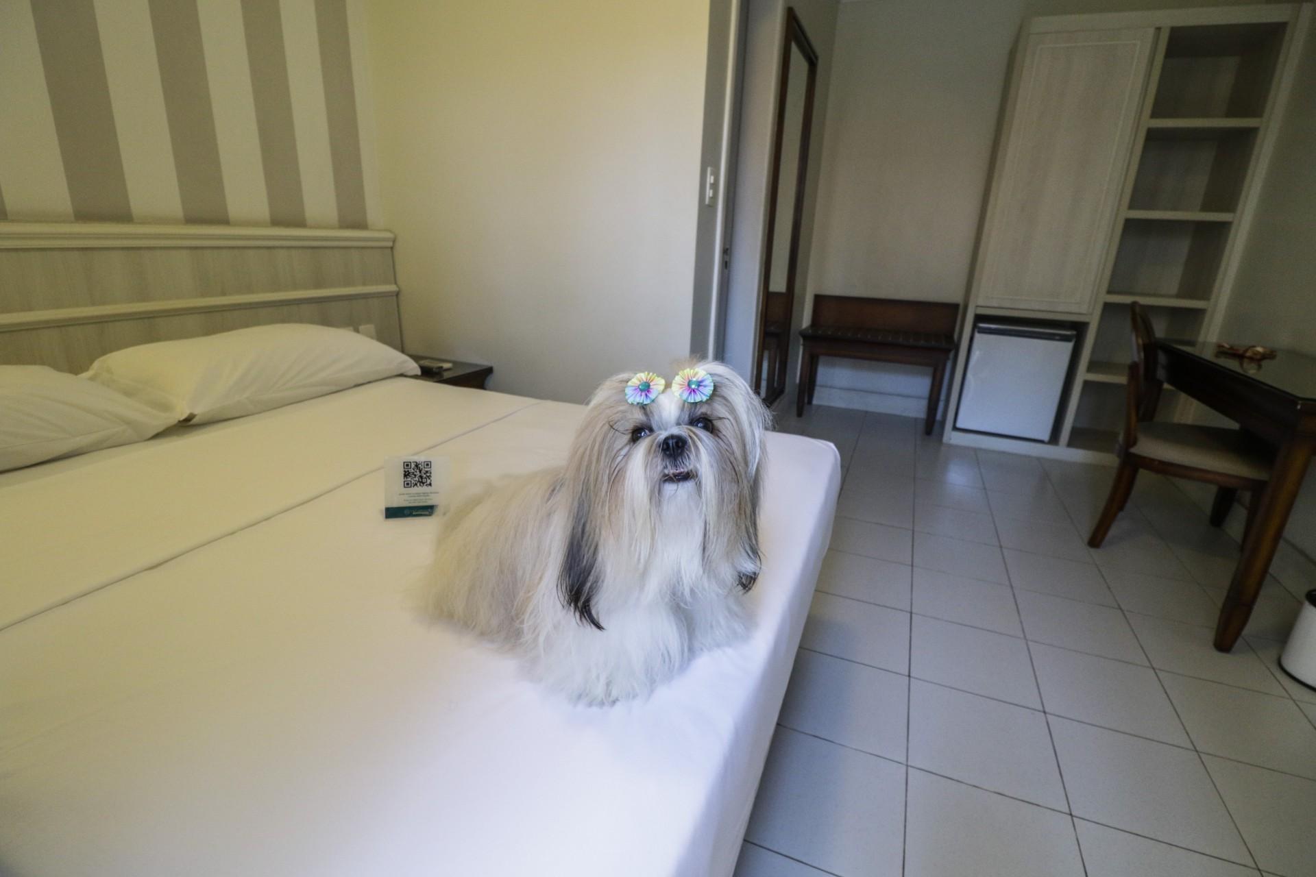 Hotéis, restaurantes e shopping centers de Fortaleza têm aderido ao conceito 'pet friendly' (Foto: (Thais Mesquita/OPOVO))