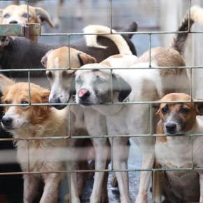 Abrigo São Lázaro anuncia encerramento de resgates de animais por falta de recursos