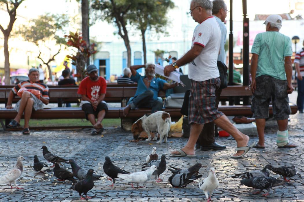 Os pombos (Columba livia) estão perfeitamente adaptados às cidades no Brasil