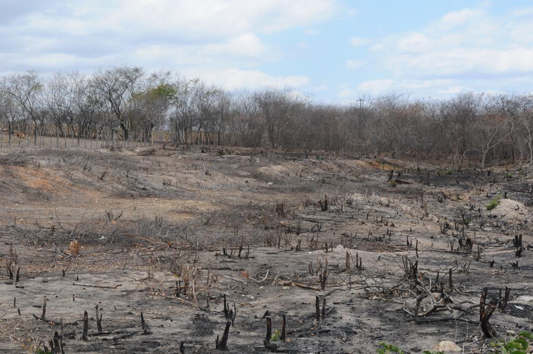 Desertificação em Iguaçu, distrito de Canindé. Terrenos expostos a queimadas em Iguaçu em 2012.(Foto: DEIVYSON TEIXEIRA )