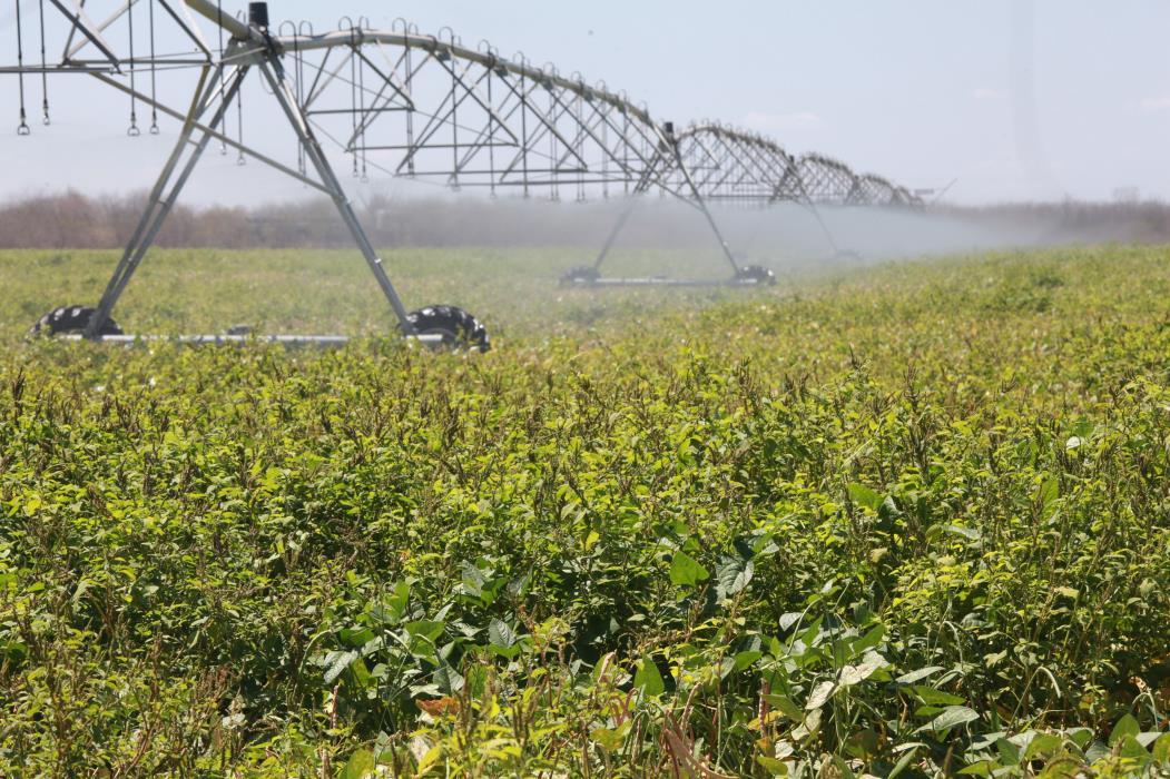 Nordeste, segundo o BNB, concentra 26% da área irrigada do Brasil (Foto: SARA MAIA)