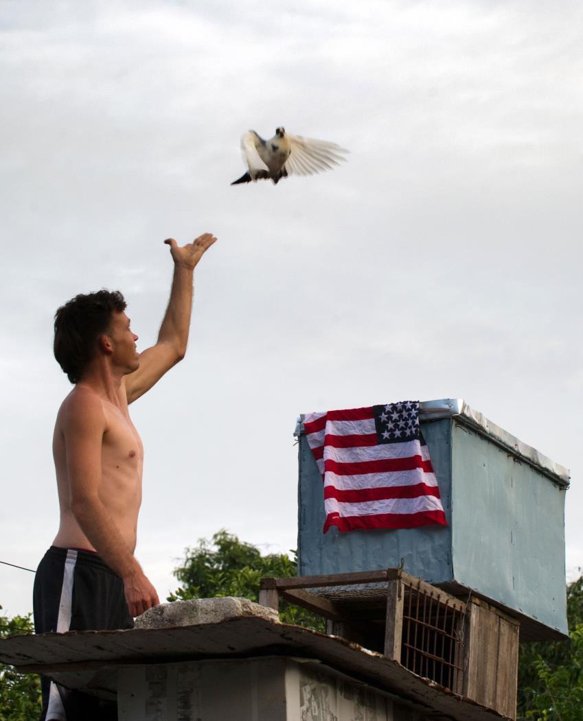 Os pombos foram introduzidos no século XVII nas colônias que se transformaram nos EUA